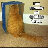 LALALALALALA. Not Listening! #cats #humor